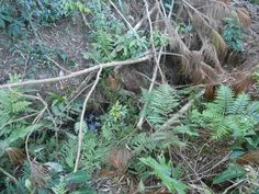 Desmatamento irregular destruiu vegetação das margens das nascentes do rio Imbituvão