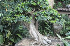 bonsai_tree_by_riffraft-d483k4o.jpg (3456×2304)