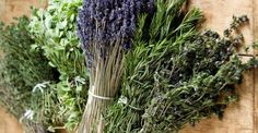 Herbes de Provence Collection of Seeds - A Provençal mixture of 9 Herbs - All Organic Culinary Herbs Herb Seeds, Fennel Seeds, Southern Greens, Fish And Meat, Organic Herbs, Aromatic Herbs, Natural Herbs, Planting Seeds, Cannabis
