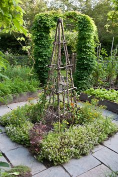 Rustic Tuteur ~Trellis with herbs in the center of a Potager - Vegetable garden. Made from simple cut branches and twigs. How clever and pretty.