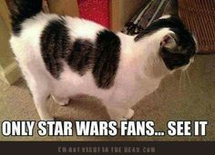 I have never seen a Star Wars movie and I see it. HA!