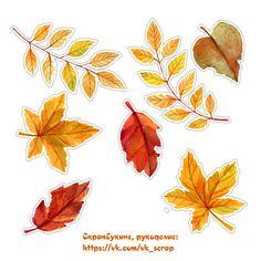 Осенние картинки, листья