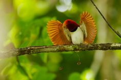 clothing inspired by birds of paradise - Google Search