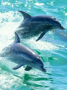 Love dolphins .