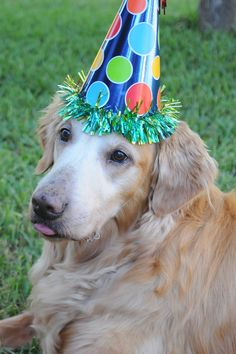 We celebrated Tristan's 12th Birthday on September 21, 2013!  Share and like because he's so wonderful! <3