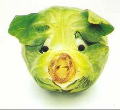 Cabbage Pig. Pork fans might be confused by this one?