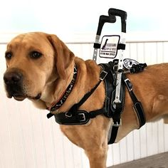 Mobility Support Harness™ for brace and balance stability assistance - Bold Lead Designs Dog Training Methods, Basic Dog Training, Dog Training Techniques, Training Your Puppy, Training Dogs, Puppy Obedience Training, Positive Dog Training, Easiest Dogs To Train, Service Dogs