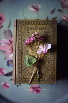 Little Red House: Thursday's Inspiration: Books Old Books, Antique Books, Vintage Books, Photos Amoureux, Thursday Inspiration, Book Flowers, Book Letters, Book Aesthetic, Book Photography