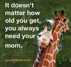 Slikovni rezultat za it doesn't matter how old you get, you always need your mom Bond Quotes, All Quotes, Great Quotes, Quotes To Live By, Funny Quotes, Life Quotes, Inspirational Quotes, Random Quotes, Quotable Quotes