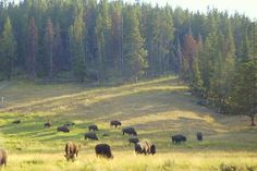 Love! Yellowstone National Park