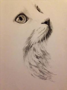 Image result for charcoal cat drawings