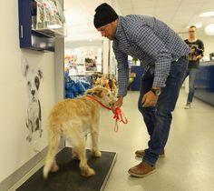 Arthur, le chien errant devenu le co-équipier d'une équipe d'athlètes, a enfin retrouvé son maître ! - Cause animale - Wamiz