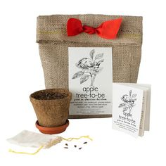 Apple tree-to-be kit...for the apple lover on your list!