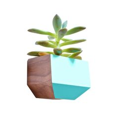 Succulents aren't going anywhere. These adorable, stylish, easy-to-care-for plants are having a major moment. Now, they're being showcased in even more inventive ways. This planter attaches to a wall w...  Find the Succulent Sidecar Planter, as seen in the Venice Beach Bungalow Collection at http://dotandbo.com/collections/venice-beach-bungalow?utm_source=pinterest&utm_medium=organic&db_sku=100726
