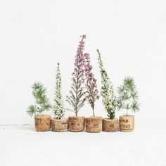 Tutorial small Christmas trees, how to make a small Christmas tree with corks and plants (italian blog).