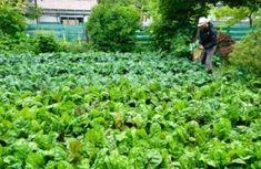 Free Urban Farming Online Course