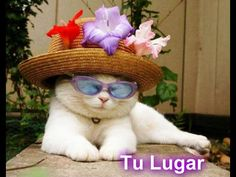 #piZap by TuLugar  cool cool cat