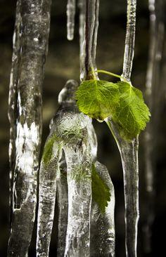 frozen by M. Bopp on 500px...... #Austria #Eis #Eiszapfen #Eiszeit #Ice #Ice Age #Wasser #Water #Winter #Wirtatobel #frozen #gefroren #icicle #weiss #white #Österreich