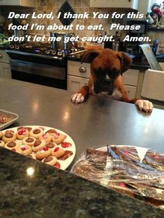 Somebody could be in trouble!!!! Cute Boxer