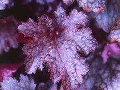 12 Positively Pretty Purple Plants and Flowers --> http://www.hgtvgardens.com/photos/landscape-and-hardscape-photos/i-heart-purple-flowers-and-plants?soc=pinterest