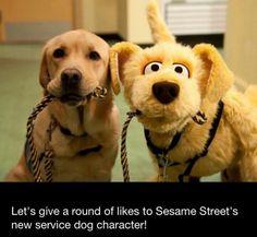 Sesame Street new service dog character
