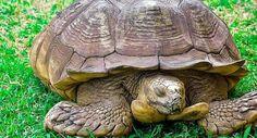Elpusztult Alagba, a 344 évesnek mondott teknős Top News Stories, Bangla News, Live Tv, Bbc, Turtle, Turtles, Tortoise