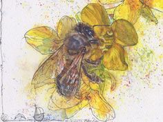 """Detail of: """"Bee and Brassicaplant-Blossom"""" (rapeseed: and yes even that needs the bees) Watercolour Mijello Gold Class Mission and Ink-pen on Saunders Waterford by St Cuthberts Mill, x 21 cm St Cuthbert, Gold Class, Petra, Bees, Watercolour, My Arts, Ink, Detail, Drawings"""