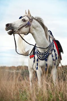 Arabian with something to say! Gorgeous white grey horse with red and black costume with tassels by carinamaiwald