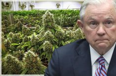 Quick! Somebody Give Jeff Sessions Some Drugs