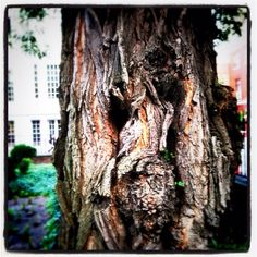 Expressive tree in the city of Brotherly Love.