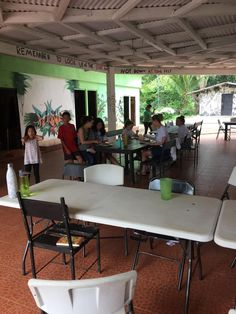 Volunteer in Costa Rica: Sloth/Mammal Conservation Amphibians, Mammals, Costa Rica Sloth, Turtle Conservation, Sea Turtles, Pet Care, Park, Home Decor, Decoration Home