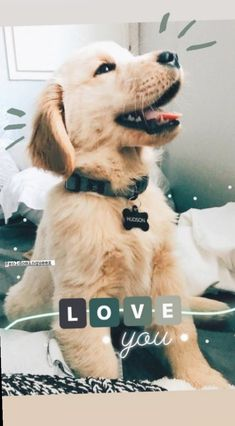 Cute Photos Ideas With Dogs Creative Instagram Stories, Foto Instagram, Instagram And Snapchat, Instagram Story Ideas, Cute Baby Dogs, Cute Dogs And Puppies, Cute Baby Animals, Doggies, Dog Tumblr