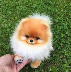 Any dogs and puppies that are cute. See more ideas about Cute Dogs, Cute puppies Tags: Super Cute Puppies, Baby Animals Super Cute, Cute Baby Dogs, Cute Little Puppies, Cute Dogs And Puppies, Cute Little Animals, Cute Funny Animals, Doggies, Cute Pets