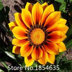 Flower seeds Gazania seeds, potted flowers seeds, sunflowers Africa,