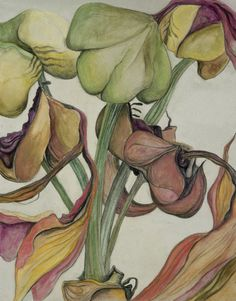 SARAH GRAHAM - uses charcoal, graphite and ink on her drawings of magnified botanicals. Macro Flower, Flower Art, Art Flowers, Dried Flowers, Botanical Illustration, Botanical Prints, Botanical Flowers, Illustration Artists, Illustrations
