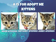 A IS FOR ADOPT ME