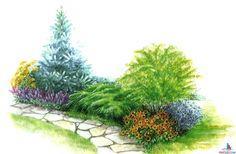 1. Ель колючая (Picea pungens) 2. Можжевельник китайский (Juniperus chinensis) 3. Ива пурпурная (Salix purpurea 'Nana') 4.Синеголовник альпийский (Erynqium alpmum) 5. Котовник Фассена (Nepeta х faassenii) 6. Кореопсис мутовчатый (Coreopsis verticillata) 7.Тысячелистник таволговый (Achilleafilipendulina 'CoronationGold') 8. Пенстемон бородатый (Penstemon barbatus)