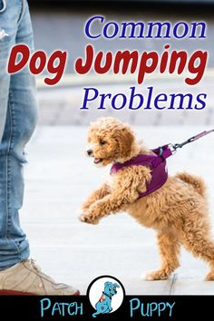 "Do you know how to solve these common dog jumping problems? Read our post ""How to get your dog to quit jumping!"" Do you know how to solve these common dog jumping problems? Read our post ""How to get your dog to quit jumping! Dog Jumping Fence, Dog Information, Dog Care Tips, Dog Training Tips, Potty Training, Dog Behavior, New Puppy, Dog Grooming, Dog Life"