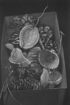 """From Childs Gallery, Boston. """"Histoires naturelles"""" by Judith Rothchild, (American (b. 1950)), mezzotint"""