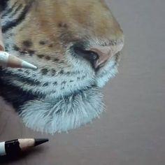 emilexcollin - 0 results for koi fish Colored Pencil Artwork, Color Pencil Art, Pencil Art Drawings, Realistic Drawings, Colorful Drawings, Animal Drawings, Pastel Drawing, Pastel Art, Painting & Drawing