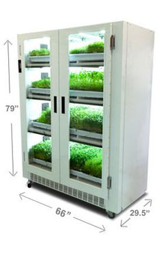 microgreens Garden microgreens Growing Aquaponics Home Depot Code: 8654090040 You are in the right place about indoor landscape Aquaponics Greenhouse, Aquaponics Diy, Hydroponics System, Hydroponic Gardening, Indoor Hydroponics, Culture Bio, Vertical Farming, Herbs Indoors, Urban Farming