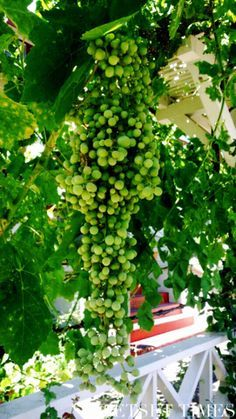 The Best Kept Secrets Of California Wine Country: St. Helena & Calistoga