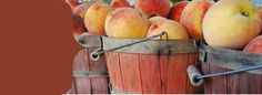 The Sweet Georgia Peach web site offers 87 different peach recipes. For next years peach trees.