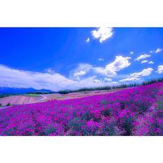 出し忘れ  ちょっと ズレちゃいましたけど せっかく 撮ったので 送り出します  BieiHokkaidoJapan.  四季彩の丘  #ahd_shotz #agean_fotografia #ptk_japan #photooftheday #ds_2015 #dream_image #Colors_of_day #gf_japan #team_jp_ #wu_asia #wu_japan #WEBSTAPICK #worldunion #worldplaces #wonderful_places #igersjp #igで繋がる空 #ig_japan #igs_asia #igs_world #Lovers_Nippon #japanfocus #hokkaidolikers #16x9pictures #unsquares #natureskingdom #nature_good #igersoftheday by r.t.900