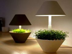 Gadgets For Growing Plants Indoors