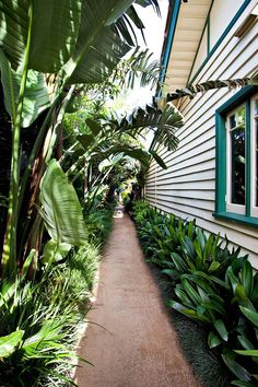 5 Pleasing Cool Tips: Backyard Garden Landscape Fruit Trees tropical backyard garden lush.Backyard Garden Design Wine Bottles backyard garden on a budget curb appeal. Side Yard Landscaping, Tropical Landscaping, Backyard Privacy, Backyard Ideas, Landscaping Plants, Modern Backyard, Modern Landscaping, Inexpensive Landscaping, Fence Plants
