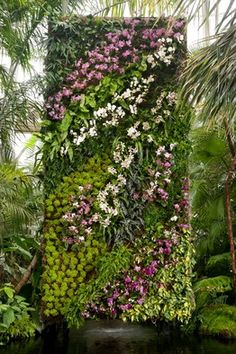 Orchid wall. What a dream!