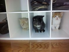 """""""Just put them in the cat cubby"""""""