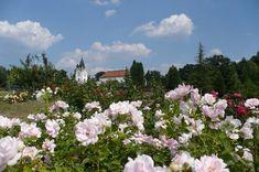 Arborétum Tesárske Mlyňany - Tipy na výlet   SPOZNAJ.EU Trips, Plants, Viajes, Traveling, Plant, Travel, Planets