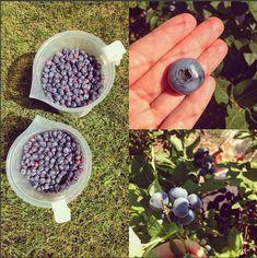 """Blueberry Pinot Noir Jam"" | www.georgiapellegrini.com"